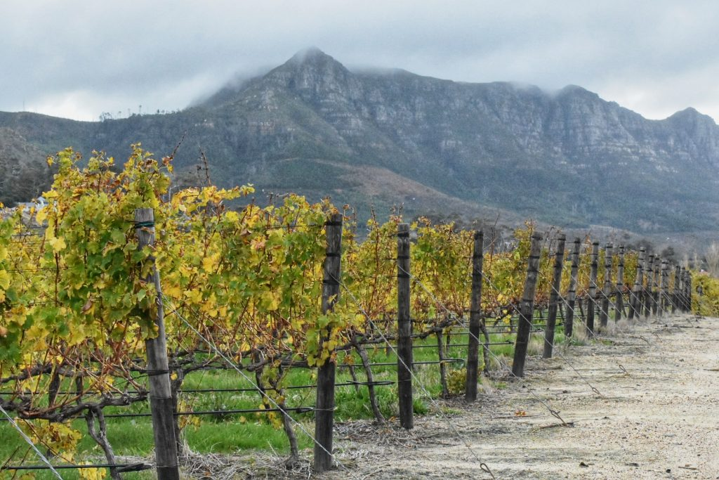 constantia-wine-valley