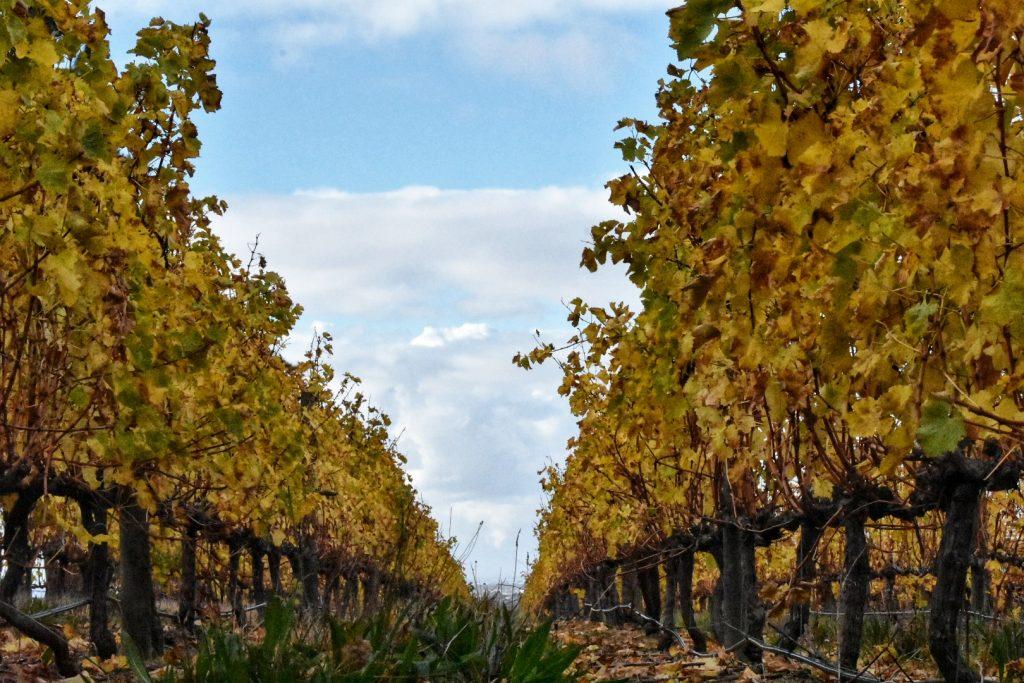 steenberg-estate-vineyards