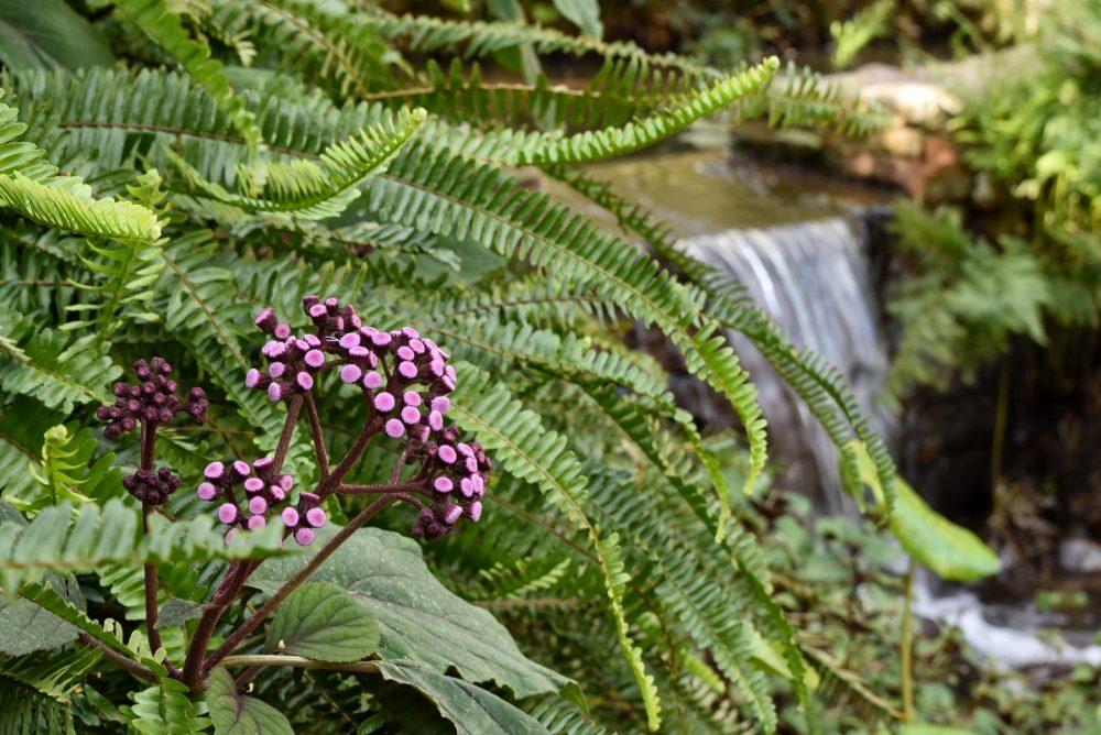 gardens-to-explore-year-round-near-the-cape-winelands-tokara
