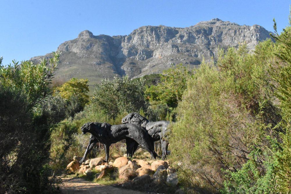 lion-lioness-dylan-lewis-sculpture-garden