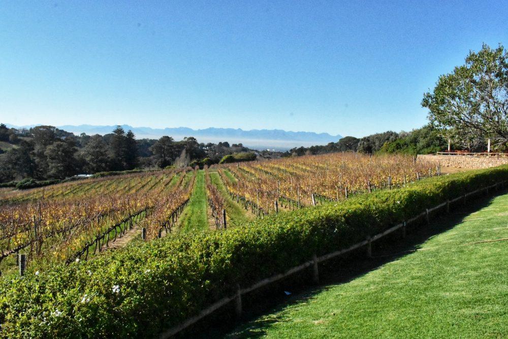 constantia-glen-constantia-wine-route