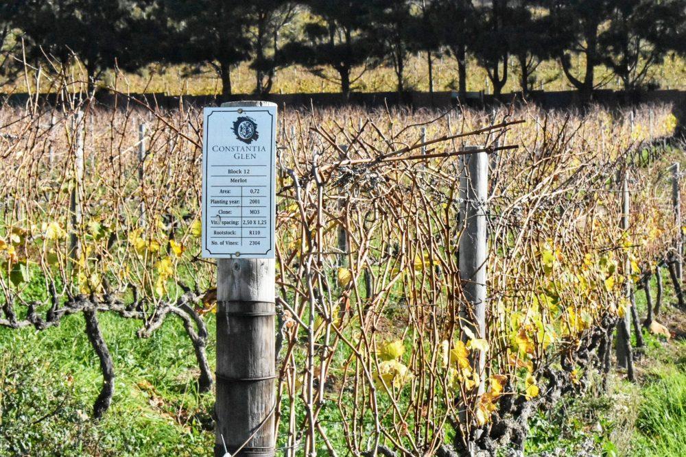 constantia-glen-vineyards