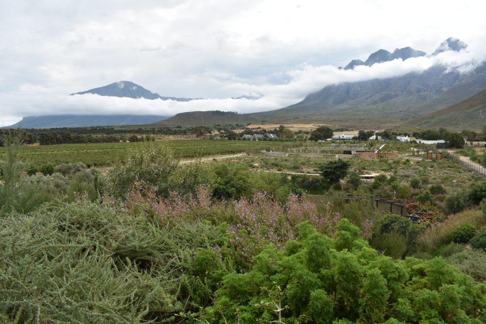 bosjes-estate