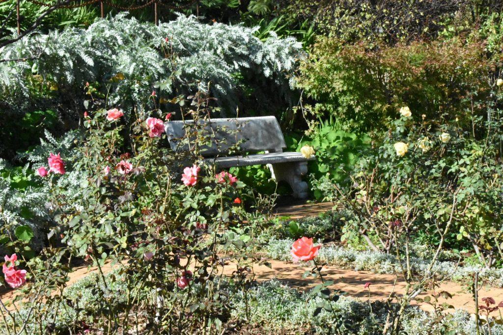 rose-garden-old-nectar