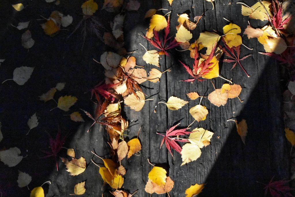old-nectar-autumn-visit