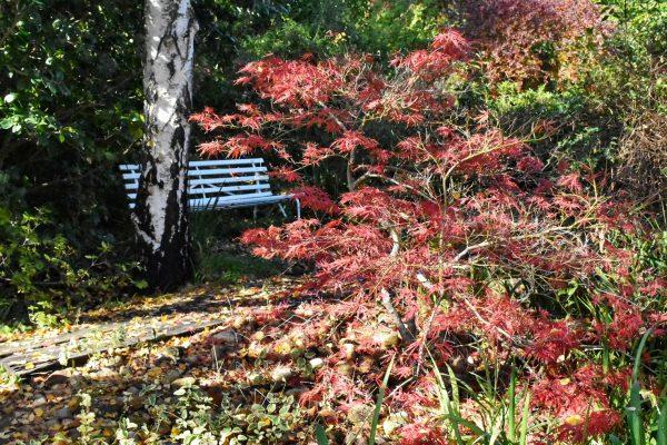best-gardens-to-explore-year-round-near-the-cape-winelands