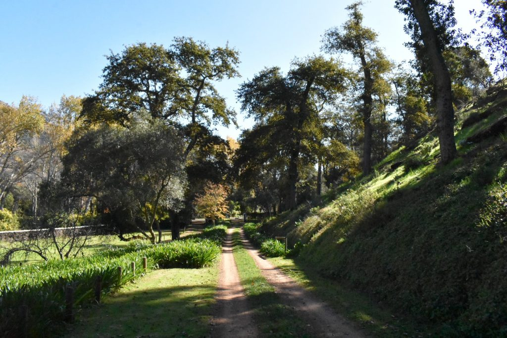old-nectar-entrance