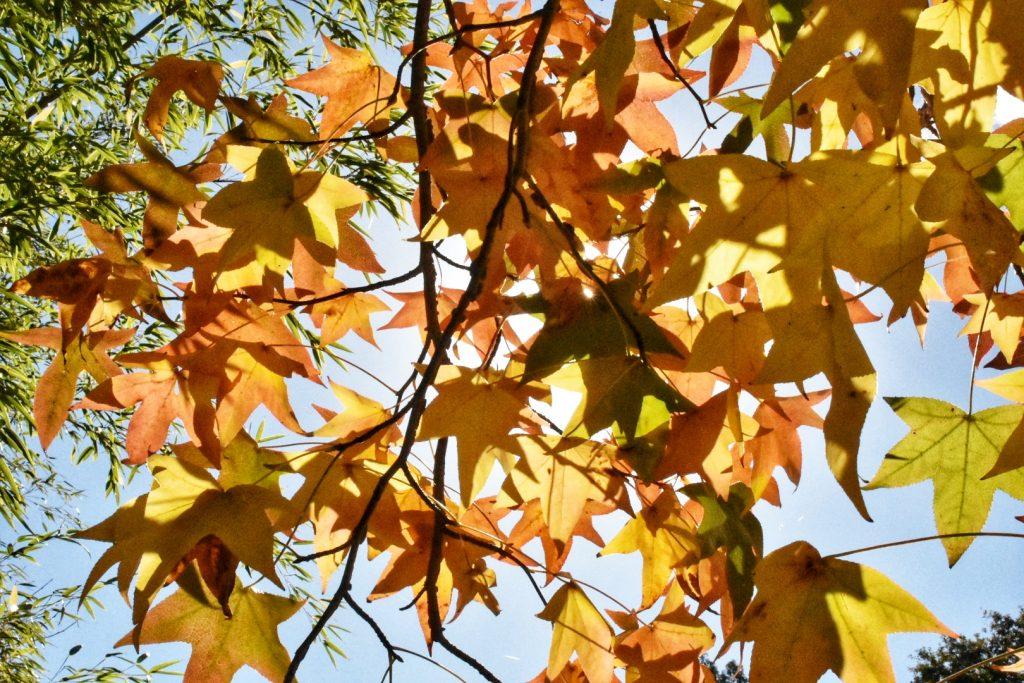 old-nectar-autumn-leaves