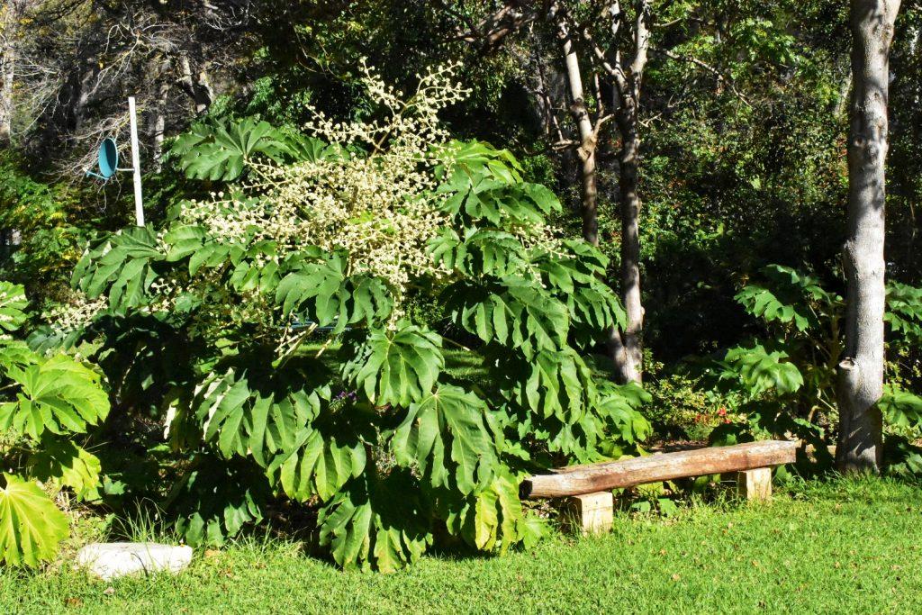 bench-old-nectar