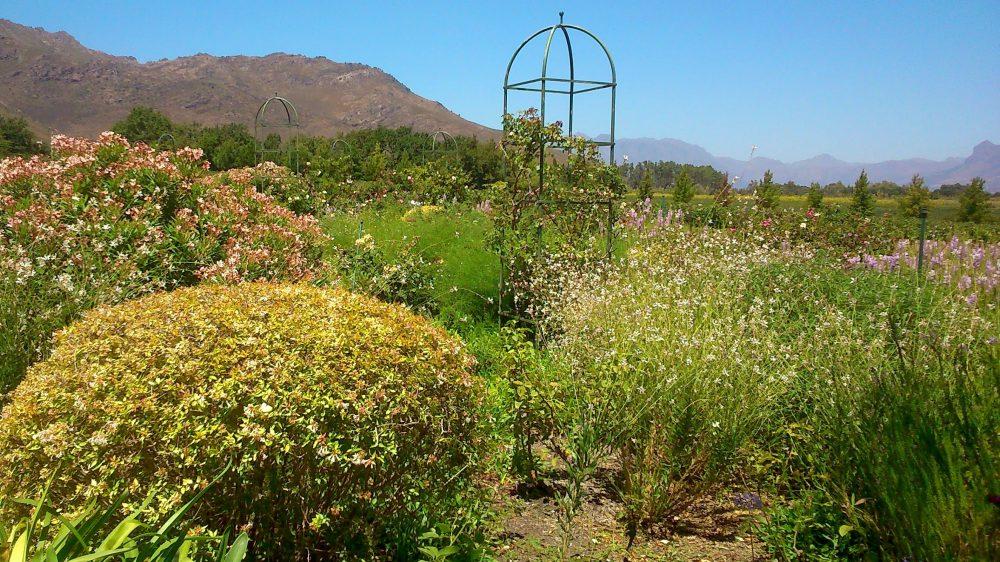 avondale-wine-gardens