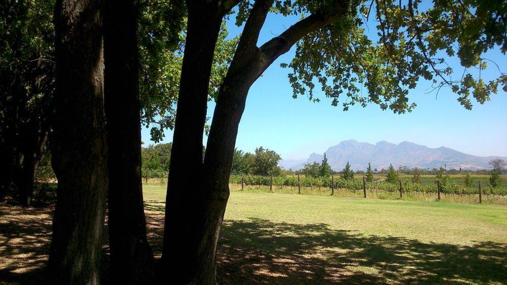 avondale-wine-paarl-winelands