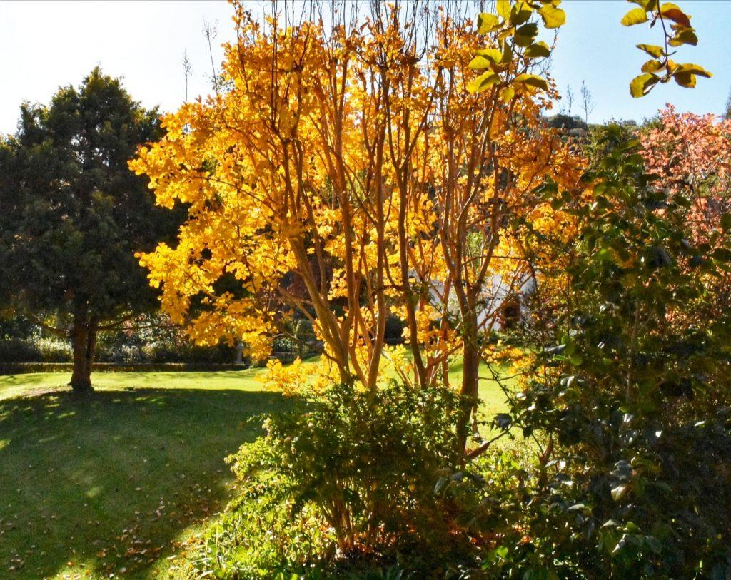 autumn-colours-stellenbosch