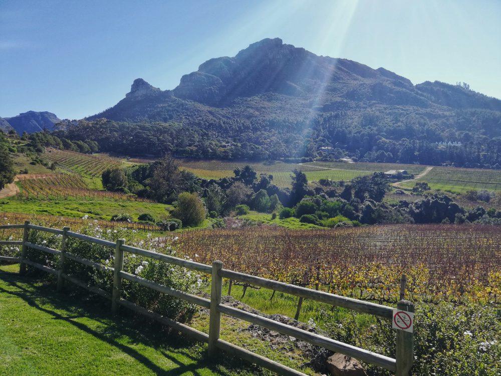 constantia-glen-wine-estate