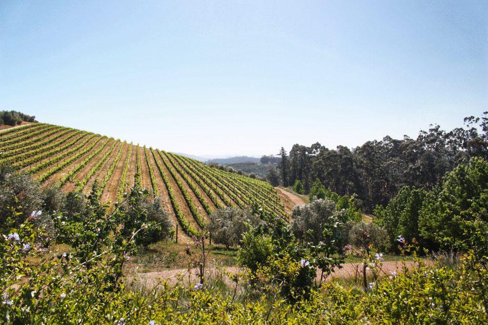 gardens-to-explore-year-round-near-the-cape-winelands-tokara-vineyards