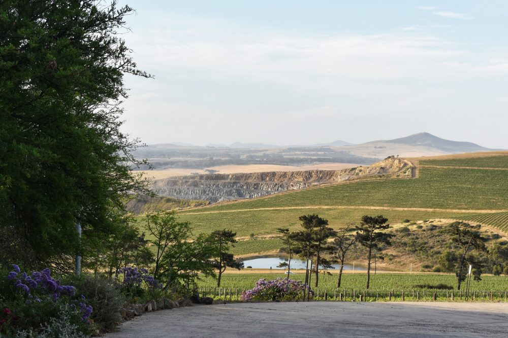 favourite-cape-winelands-wine-pairings-durbanville