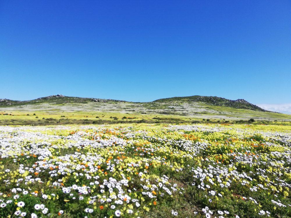 reasons-to-visit-west-coast-national-park-postberg