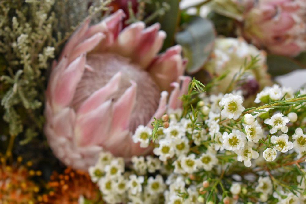 fabulous-fynbos-fynbos-and-protea-workshop-proteas