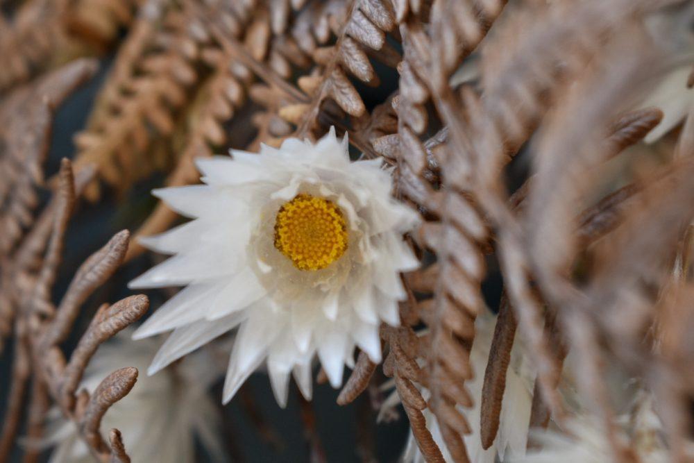 fynbos-proteas