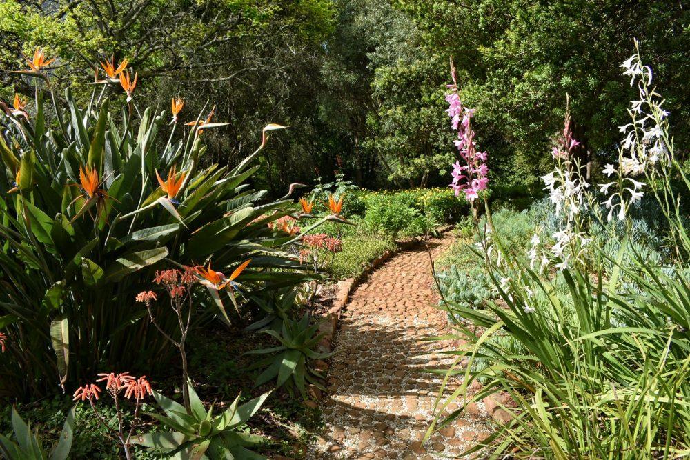 tokara-estate-stellenbosch-open-gardens