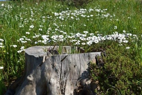 wild-flowers-tygerberg-nature-reserve
