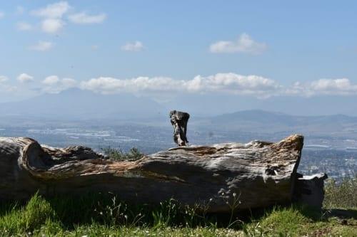 tygerberg-nature-reserve-cape-town-hiking