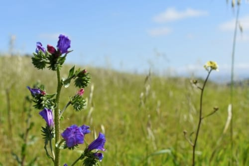 flowers-tygerberg-nature-reserve