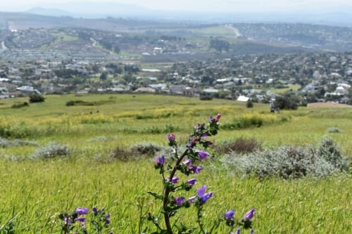 tygerberg-nature-reserve-scenic-sights