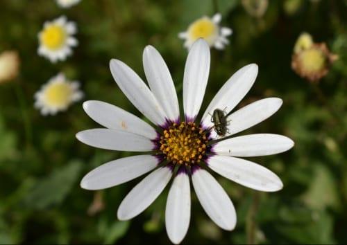 tygerberg-nature-reserve-flower