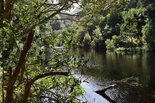 harold-porter-botanical-garden